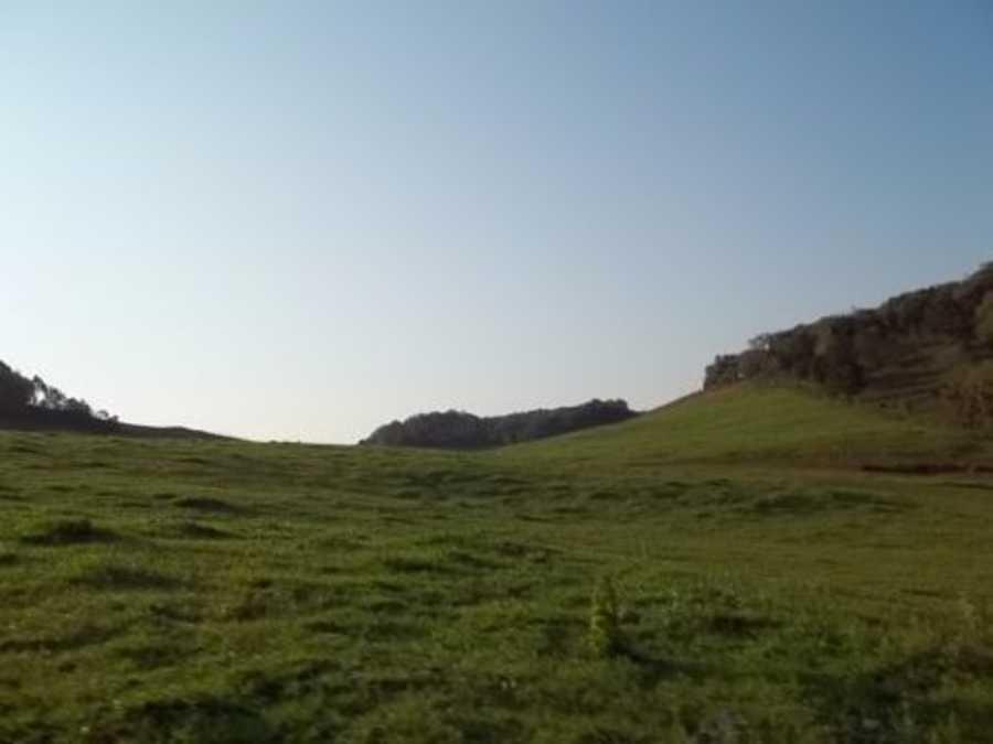 Area Rural, Campo para soja e criação