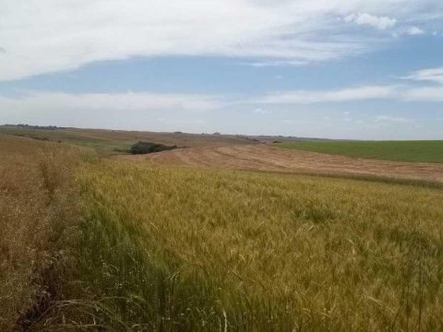 Area Rural, Campo para soja